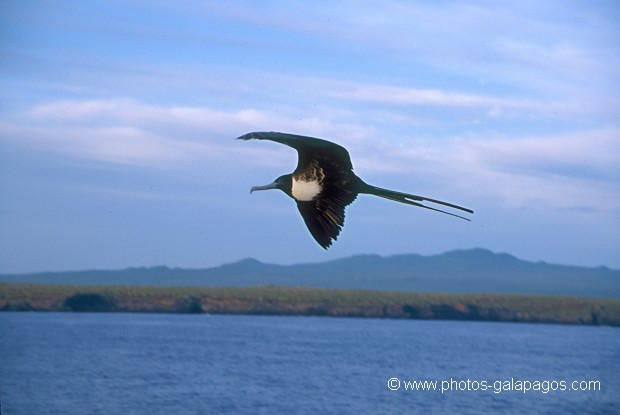 , Parc National des Galapagos, Equateur