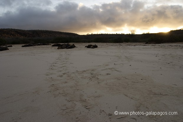 , Galapagos , Equateur , Parc National des Galapagos , Soleil couchant  , Parc National des Galapagos, Equateur